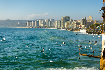 Birds enjoying the sun and surf in Vina del Mar, Chile