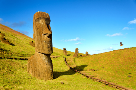 The Moai of the hills of Easter Island, Chile are joined in their solitude by a flying hawk