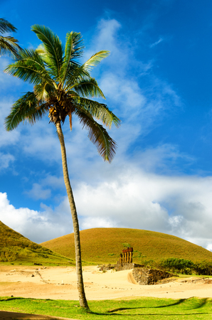 moai: Palm tree towering over Moai at Anakena Beach on Easter Island in Chile