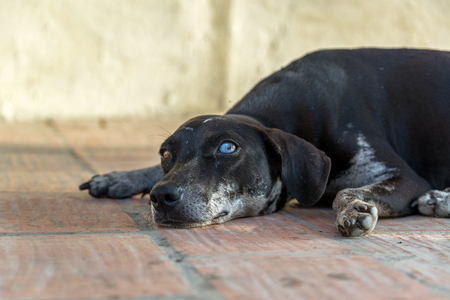 Eye level view of a dog in Mompox, Colombia