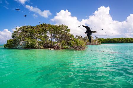 Mangrove and frigatebirds in the Caribbean Sea in the Sian Kaan Biosphere Reserve near Punta Allen, Mexico Stock Photo