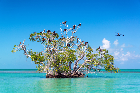 Mangrove tree in the Caribbean Sea in the Sian Kaan Biosphere Reserve near Tulum, Mexico Stock Photo