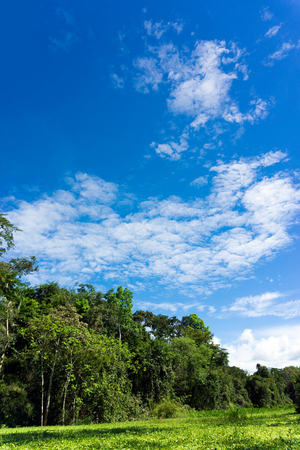 Vertical landscape view of the Amazon Rainforest in Peru Stock Photo