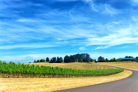 Road passing by a vineyard with a beautiful blue sky in Dundee, Oregon