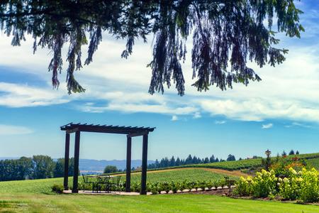 Landscape of vineyards in Dundee, Oregon