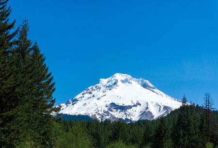 mt hood national forest: View of the snow capped peak of Mt Hood rising above Mount Hood National Forest