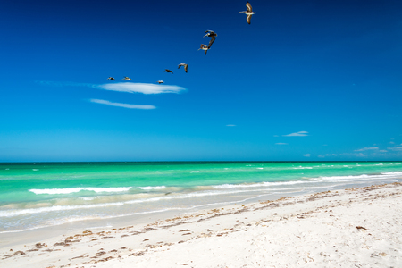 Beautiful white sand beach with pelicans flying over it near Rio Lagartos, Mexico Stock Photo