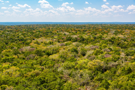 calakmul: Lush green impenetrable jungle around Calakmul, Mexico Stock Photo