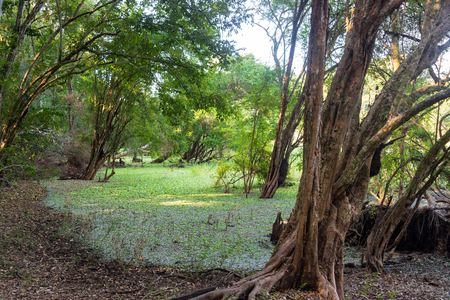 calakmul: View of a wetland within the Calakmul Biosphere Reserve in Campeche, Mexico