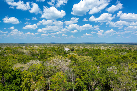 calakmul: Jungle landscape with a Mayan temple visible in Calakmul, Mexico Stock Photo