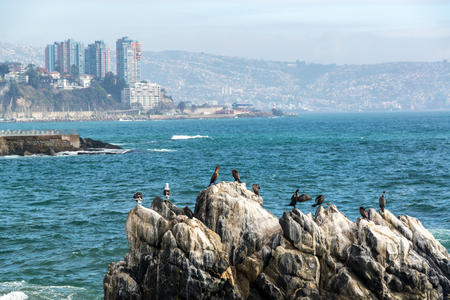 Cormorants and Sea Gulls on a rock in Vina del Mar, Chile
