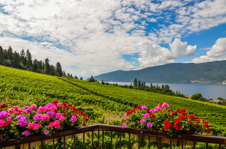 flower baskets: Okanagan vineyard and flower baskets