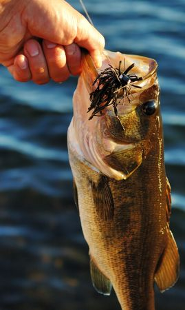 Image of large mouth bass  Stock Photo
