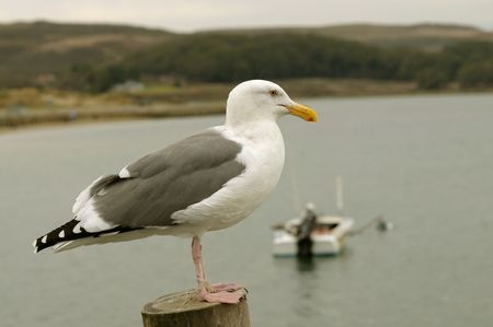 Close up image of seagull at beach Stock Photo