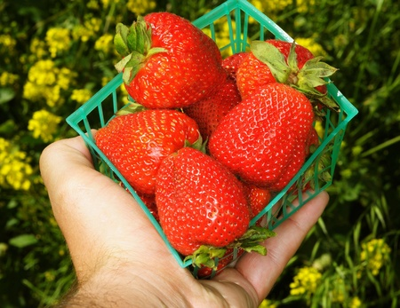Image of hand holding strawberries in container Stock Photo