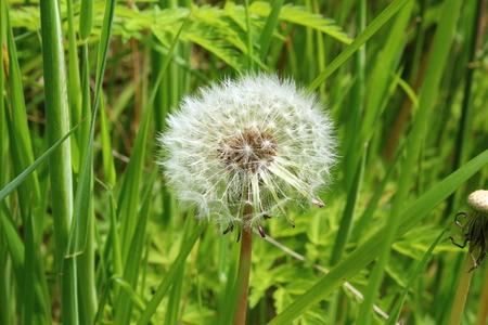 dusting: Dusting Flower