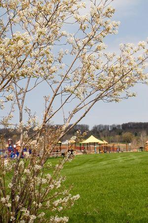 バック グラウンドでの公園遊び場春の花の木