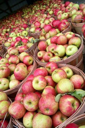 bushel: Bushels of Honey Crisp apples at a Farm Market