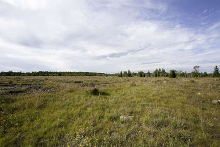 great plains: The Maxton Plains Preserve, one of the rarest habitats in the world this Alvar Grassland is located on Drummond Island, Michigan