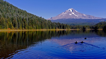 Mt Hood, Oregon, Trillium Lake in the foreground