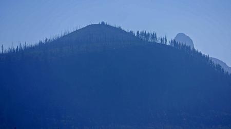 Hillside near Suttle Lake, Oregon.  Peak of Mt Washington in background