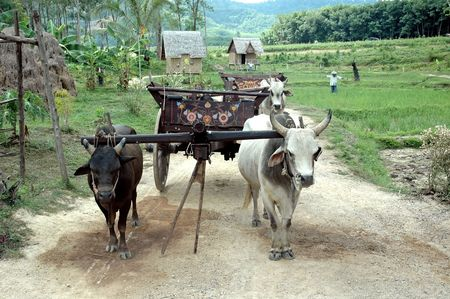 in ox: OX Cart Stock Photo