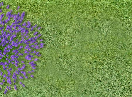 aerial view flowers