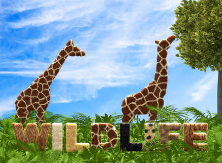 animals wildlife sign with giraffes