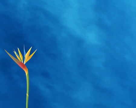 Nature flower Imagens