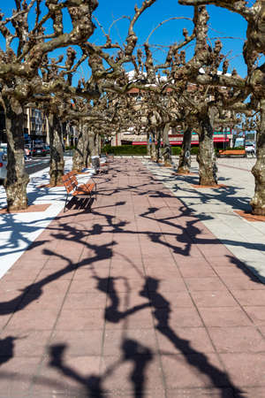 Walkway in the city center square with trees on the sides in Northern Spain