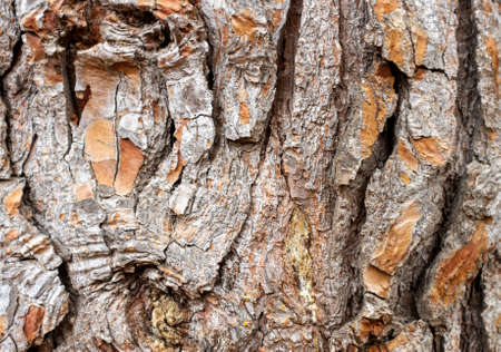 tree bark fence shot ideal for texture or background Banque d'images