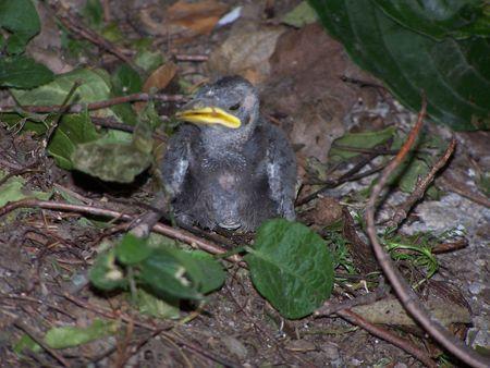 bird stranded