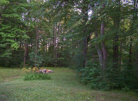 Wisconsin Woodland