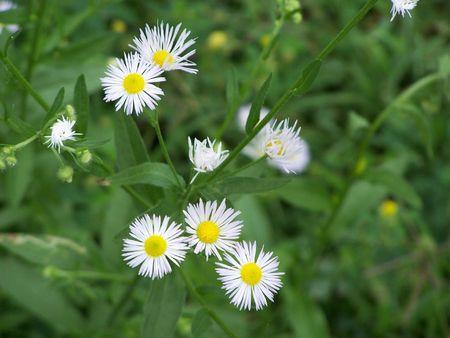Little white wildflowers 스톡 콘텐츠