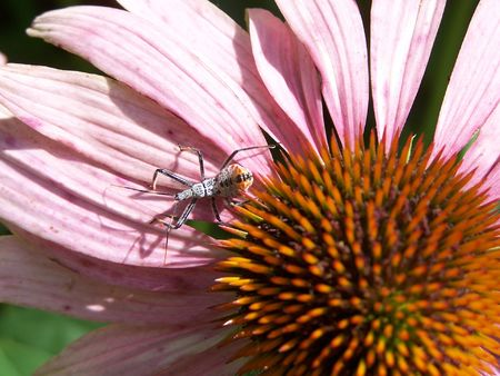 larger than life: Bug on a flower Stock Photo