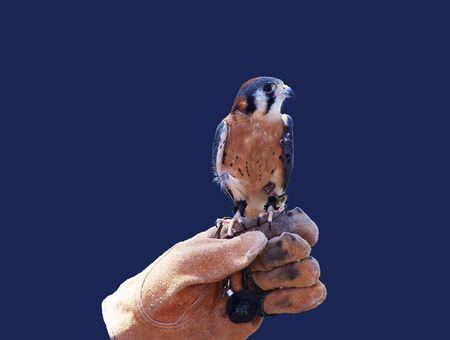 Trained Falcon