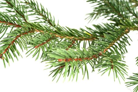 arbre: Branche de sapin Stock Photo