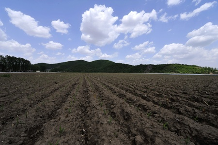 iuml: Cultivated land