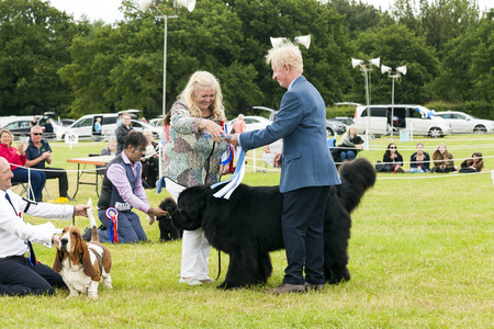 the royal county: Cheshire, England - June 22 2016. Young woman is presented with  rosette as her Newfoundland dog wins best in show, at the Royal County Cheshire Show, England, UK. Editorial