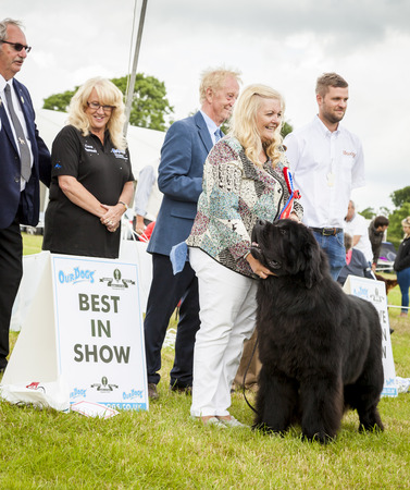 newfoundland dog: Cheshire, England - June 22 2016. Young woman is presented with  rosette as her Newfoundland dog wins best in show, at the Royal County Cheshire Show, England, UK. Editorial
