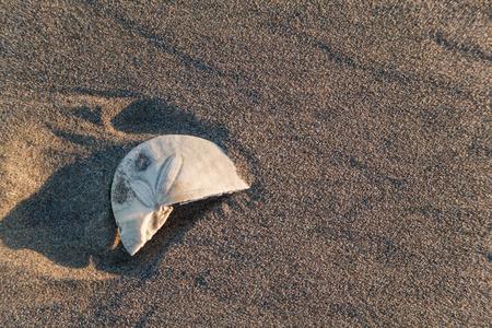 sand background I Stok Fotoğraf - 36352407