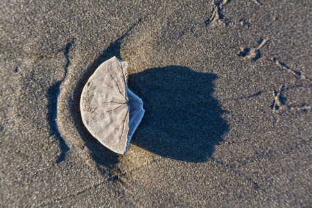 formation of a flower by the sun ligh hitting a  sea shelf on the sand