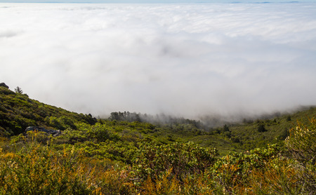 View of Marin County bay area cover by heavy fog under a blue sunny day. From the top of Mountain Tamalpais in Marin County