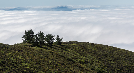foggy hill: Mt Tamalpais landscape, view of trees in top of the hill with a foggy San Francisco Bay Area on the background Stock Photo