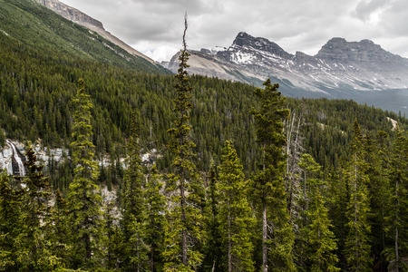 canadian rockies: The Canadian Rockies have numerous high peaks and ranges. The Canadian Rockies are composed of shale and limestone.