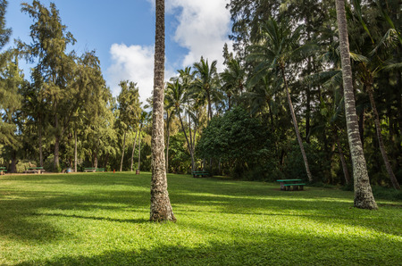 beautiful pams trees and benches in a beach park in Maui, Hawaii