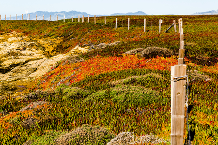 Beautiful landscape of the California Coastline, Sonoma County, Bodega Bay area on a sunny day. Colorful water flowers and vegeation