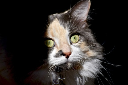 calico: Calico cat in the shadows