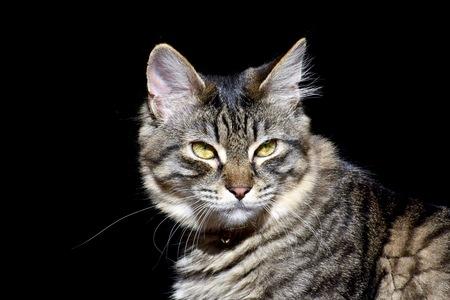 beautiful cat: Beautiful cat