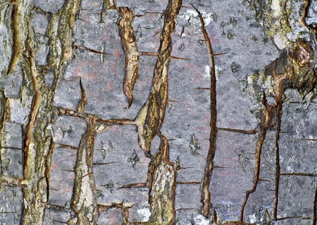 barks: Tree bark texture